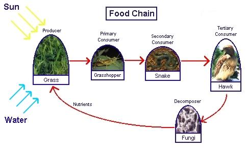 (http://3.bp.blogspot.com/_LoHkkpMeHiw/TMaL2ZFMTuI/AAAAAAAAAA8/ZcUXaOmj7AQ/s1600/food_chain%25252525252525203.jpg)