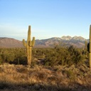 (http://static.greatbigcanvas.com/images/square/panoramic-images/saguaro-cacti-in-a-desert-four-peaks-phoenix-maricopa-county-arizona,112404.jpg?max=128)
