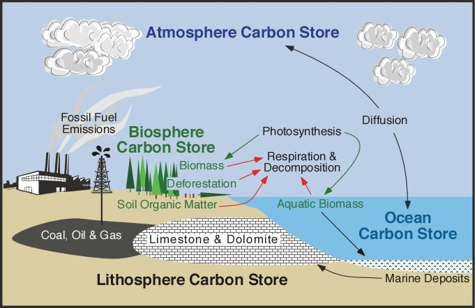 (http://www.physicalgeography.net/fundamentals/images/carboncycle.jpg)