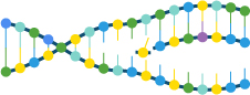 DNA helix unzipping and being copied (http://www.bbc.co.uk/schools/gcsebitesize/science/images/add_edex_bio_dna.jpg)