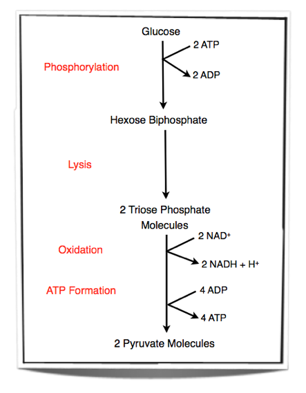 uncoupler of oxidative phosphorylation biology essay Biology-7647277doc answer 1actually, 'electron transport chain' and 'oxidative phosphorylation' are interlinked by nature while, 'uncouplers' are the molecules that break the linkage between both and.