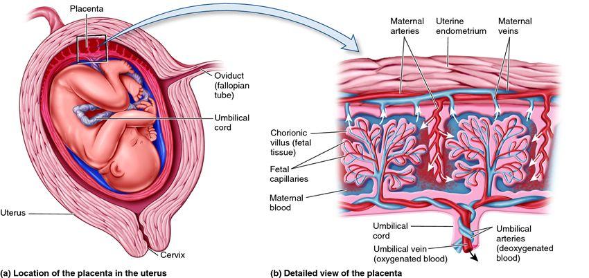 (http://biology-forums.com/gallery/33_01_08_11_10_36_29_12621022.jpeg)