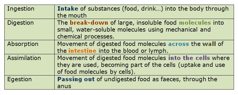 (http://biology-igcse.weebly.com/uploads/1/5/0/7/15070316/4188962_orig.png)