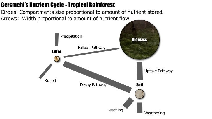 (http://image.slidesharecdn.com/nutrient-cycling-key-090414174003-phpapp02/95/ib-geography-ecosystems-nutrient-cycling-22-728.jpg?cb=1239731454)