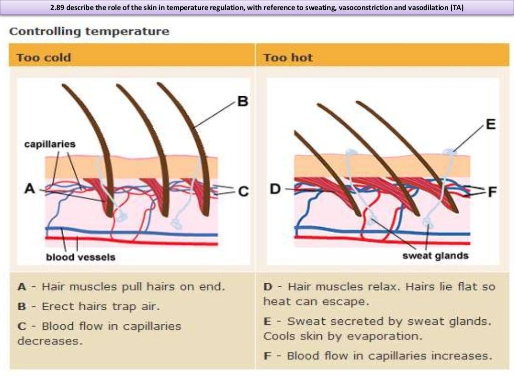 (http://image.slidesharecdn.com/igcsebiologyedexcell2-140916213251-phpapp01/95/igcse-biology-edexcel-277-290-37-1024.jpg?cb=1410905825)