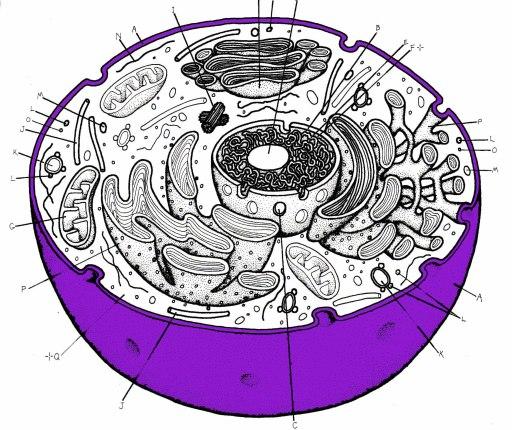 (http://images.protopage.com/view/721453/botqfgpzqjqnwrjpc6bjxnvnp.jpg)