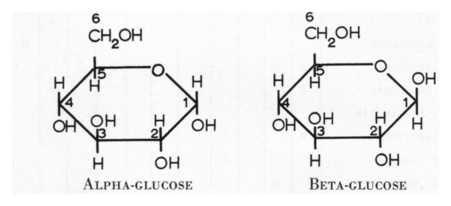 (http://2.bp.blogspot.com/-RlMSy4ukvs0/TeZ6QkDeYUI/AAAAAAAAAMc/2I-8F68rEJ4/s1600/alpha+and+beta+glucose.jpg)