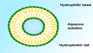(http://study.com/cimages/multimages/16/vesicle1a.png)