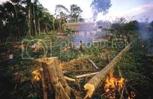 (http://i169.photobucket.com/albums/u238/biopact2/biopact_tropics_deforestation_pover.jpg?t=1180622217)