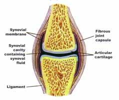 (http://www.rejuvenation-science.com/images/joint-knee.jpg)