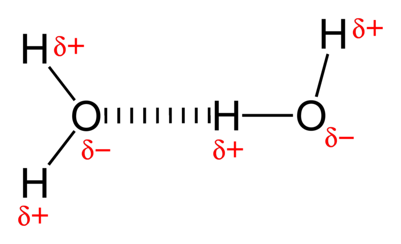 (http://upload.wikimedia.org/wikipedia/commons/thumb/b/b5/Hydrogen-bonding-in-water-2D.png/800px-Hydrogen-bonding-in-water-2D.png)