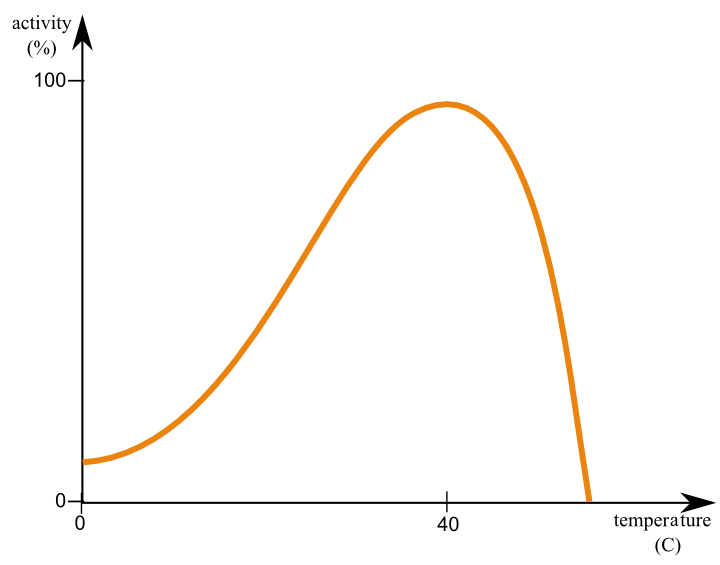 (http://upload.wikimedia.org/wikipedia/commons/6/66/Enzyme-temperature.png)