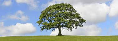 Tree (http://t0.gstatic.com/images?q=tbn:ANd9GcSkicujP8dMKidhr8RshmmmVyy-pdjbzxuDLRHN13DPn6En64eE)