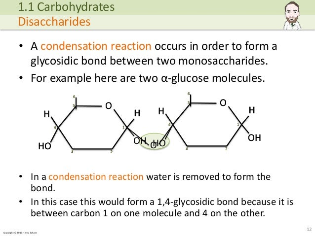 Copyright © 2015 Henry Exham • A condensation reaction occurs in order to form a glycosidic bond between two monosaccharid... (http://image.slidesharecdn.com/alevelbiology-1biologicalmoleculessample-150724121945-lva1-app6892/95/a-level-biology-biological-molecules-12-638.jpg?cb=1437740601)