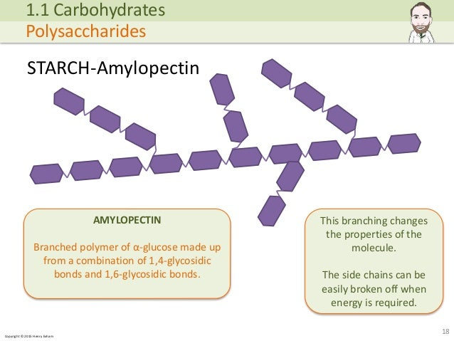 Copyright © 2015 Henry Exham STARCH-Amylopectin 18 1.1 Carbohydrates Polysaccharides AMYLOPECTIN Branched polymer of α-glu... (http://image.slidesharecdn.com/alevelbiology-1biologicalmoleculessample-150724121945-lva1-app6892/95/a-level-biology-biological-molecules-18-638.jpg?cb=1437740601)