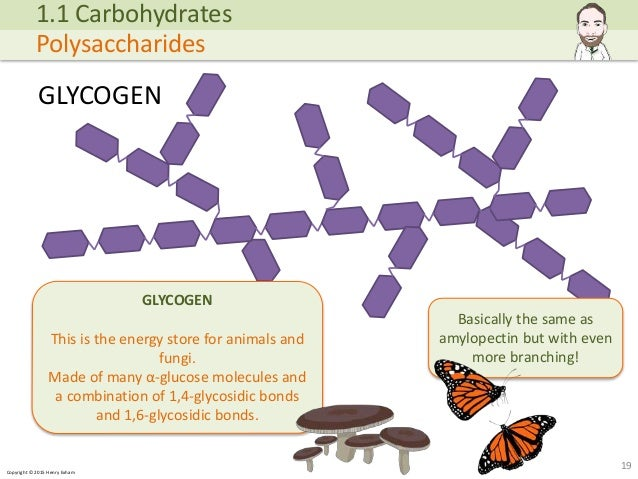 Copyright © 2015 Henry Exham GLYCOGEN 19 1.1 Carbohydrates Polysaccharides GLYCOGEN This is the energy store for animals a... (http://image.slidesharecdn.com/alevelbiology-1biologicalmoleculessample-150724121945-lva1-app6892/95/a-level-biology-biological-molecules-19-638.jpg?cb=1437740601)