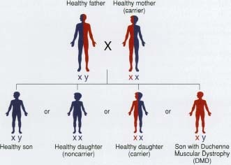 (http://www.humanillnesses.com/original/images/hdc_0001_0002_0_img0183.jpg)