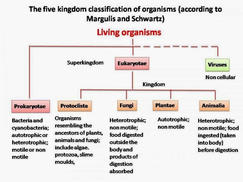 six kingdom classification system - 800×600