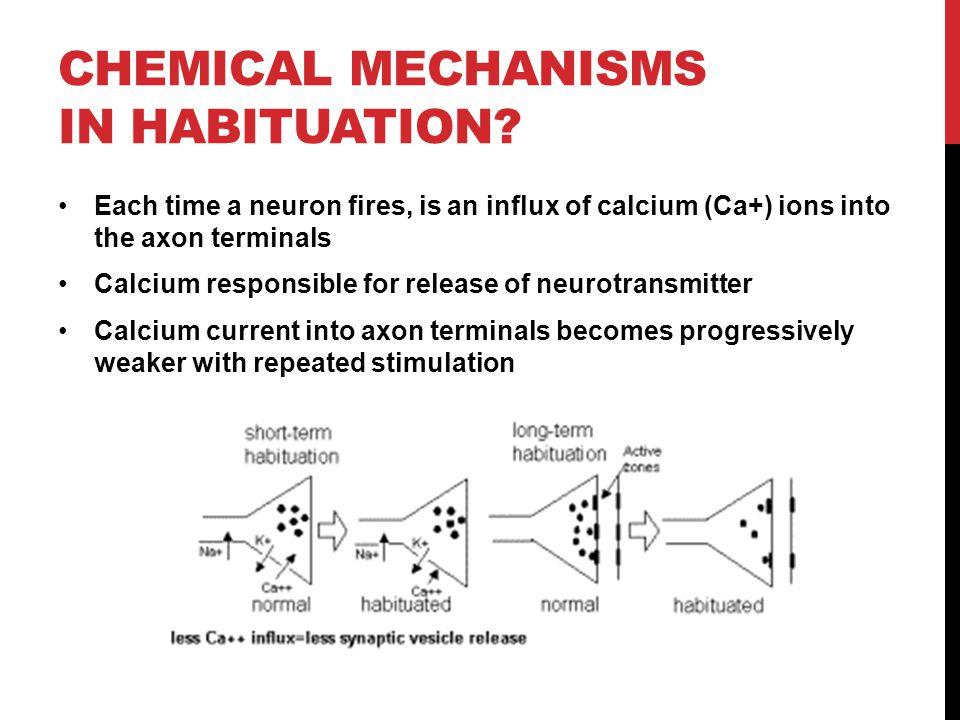 Image result for habituation diagram (http://slideplayer.com/3066705/11/images/26/chemical+mechanisms+in+Habituation.jpg)