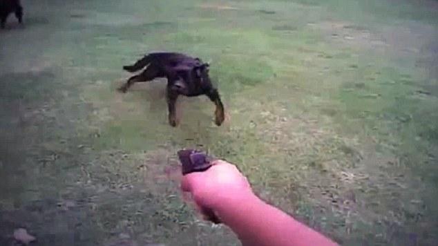Image result for dog getting shot (http://i.dailymail.co.uk/i/pix/2015/04/24/11/27EF039600000578-0-image-a-35_1429870722149.jpg)