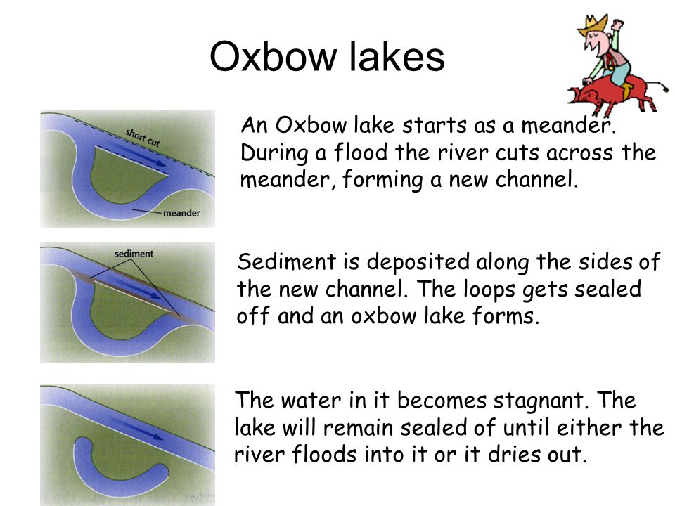 Image result for how are ox bow formed (http://slideplayer.com/1585787/5/images/41/Oxbow+lakes+An+Oxbow+lake+starts+as+a+meander.+During+a+flood+the+river+cuts+across+the+meander%2C+forming+a+new+channel..jpg)