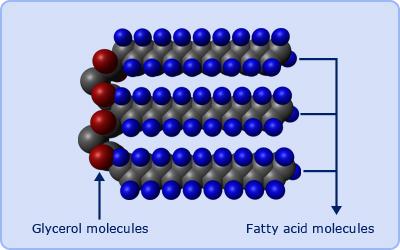 (http://www.passmyexams.co.uk/GCSE/biology/images/fatty_acids.jpg)