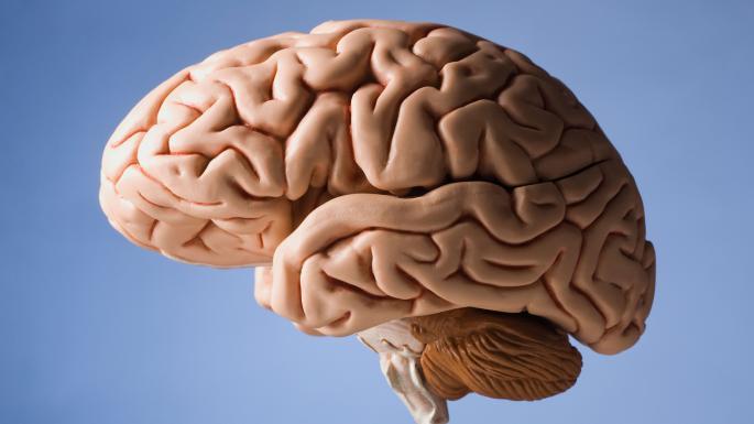 Image result for brain (http://www.thetimes.co.uk/imageserver/image/methode%2Fsundaytimes%2Fprod%2Fweb%2Fbin%2F311b8bc4-5e9e-11e7-a852-e6c7fb5977ff.jpg?crop=2250%2C1266%2C0%2C117&resize=685)
