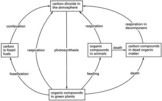 (http://1.bp.blogspot.com/-CQOxIf_vChQ/Thn89gDL1eI/AAAAAAAAAIc/R8IlXeMyR3Q/s640/carbon-cycle.1.jpg)