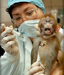 (http://4.bp.blogspot.com/--_VQOzbOoKM/T6r_d9oYx7I/AAAAAAAAAE8/vbIYsrIE0j8/s1600/animal+monkey+testing.jpg)