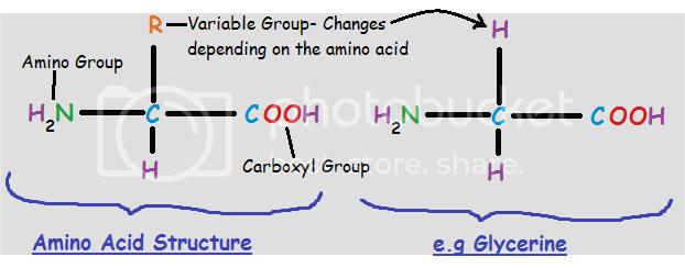 (http://i869.photobucket.com/albums/ab259/britishreject27/aminoacidstructure.png)
