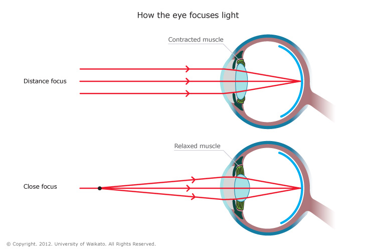 (http://pmgbiology.files.wordpress.com/2014/05/how-the-eye-focuses-light.jpg)