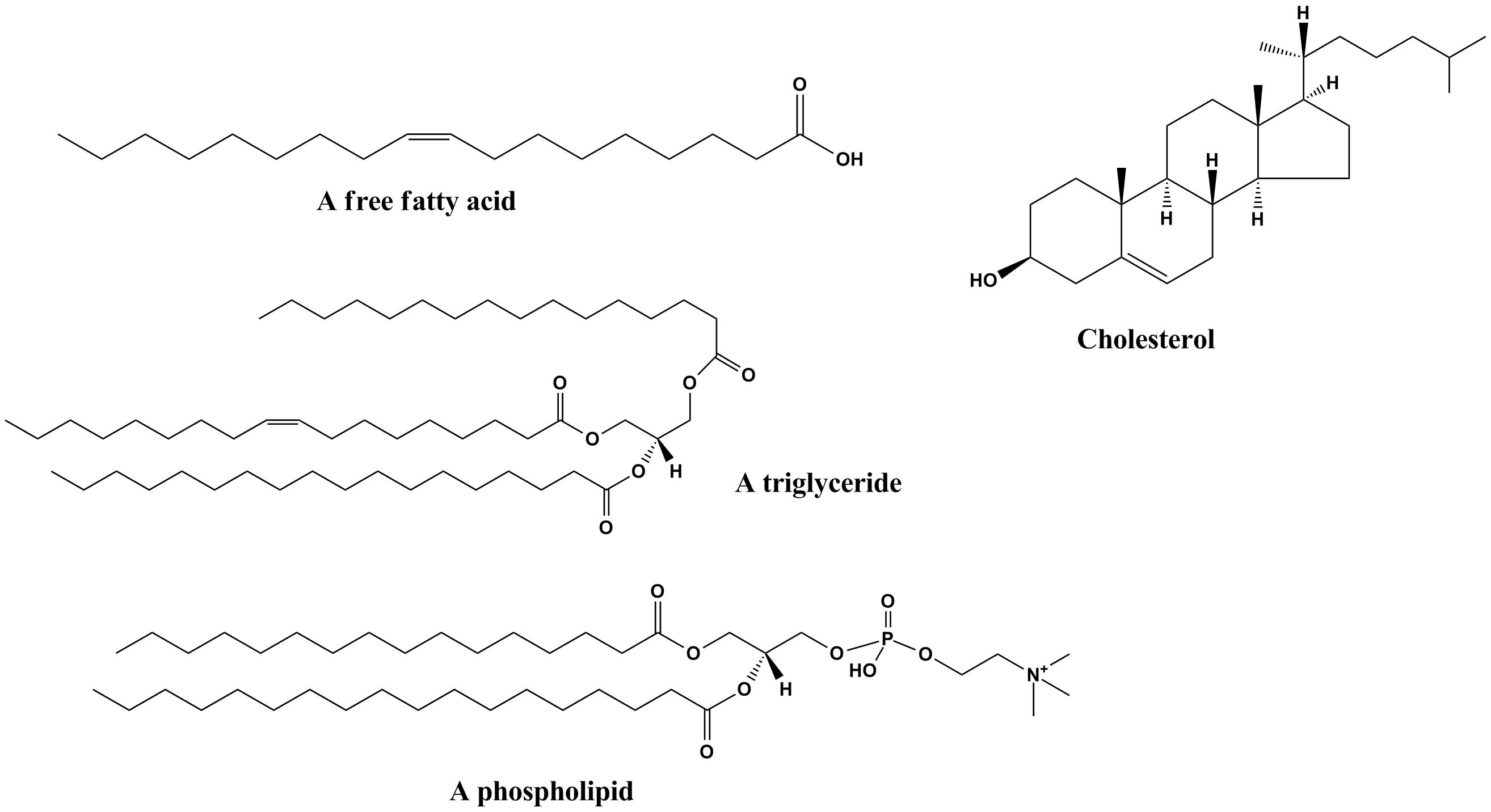 (http://oakridgeapbio.pbworks.com/f/1243342251/Common_lipids_lmaps.png)