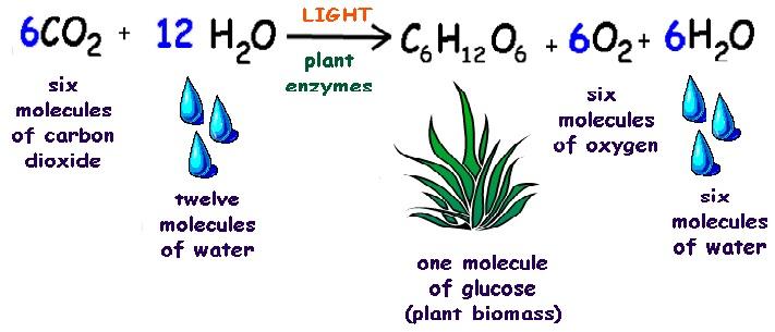 (http://4.bp.blogspot.com/_svgHo36ftEI/TFWF8DSoVXI/AAAAAAAAABg/wPyf-v78ccY/s1600/photosynthesis_equation.jpg)