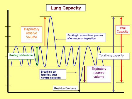 LungCapacity.jpg (http://upload.wikimedia.org/wikipedia/commons/thumb/b/ba/LungCapacity.jpg/450px-LungCapacity.jpg)