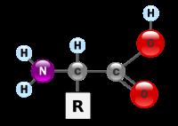 (http://upload.wikimedia.org/wikipedia/commons/thumb/c/ce/AminoAcidball.svg/200px-AminoAcidball.svg.png)