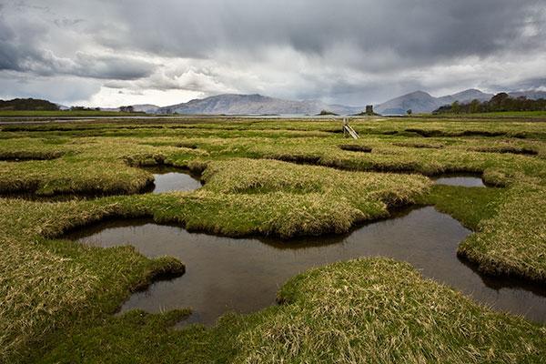 (http://waylandscape.co.uk/assets/images/Salt-Marsh.jpg)