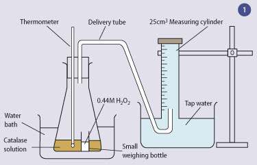 effects of the temperature of water on the reaction rate between amylase and starch The effect of temperature on the hydrolysis of starch using amylase  rate of a chemical reaction by  c the hydrolysis of starch using amylase is a.