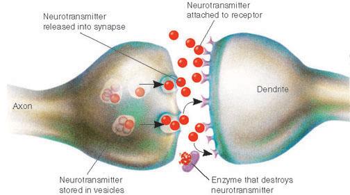 (http://4.bp.blogspot.com/_v79apjky7lM/TTzvEFc7ZnI/AAAAAAAABqY/h4aVMox6bfQ/s1600/Synapse.jpg)