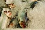 Fish (http://www.bbc.co.uk/schools/gcsebitesize/pe/images/protein.jpg)