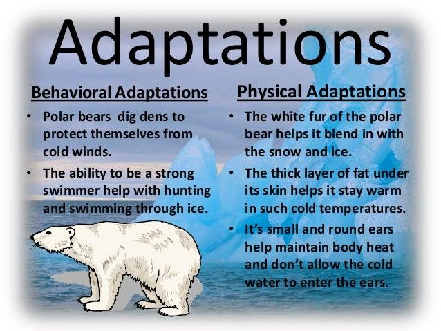 (http://image.slidesharecdn.com/polarbearadaptations-131106142928-phpapp02/95/polar-bear-adaptations-8-638.jpg?cb=1383748214)