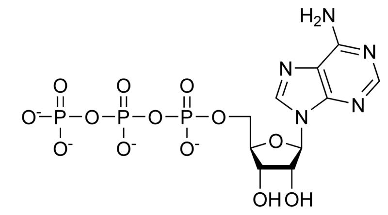 (http://chemwiki.ucdavis.edu/@api/deki/files/25707/800px-ATP_chemical_structure.png?revision=1)