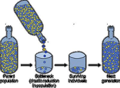 (http://media.shmoop.com/images/biology/biobook_mechevolution_graphik_6.png)