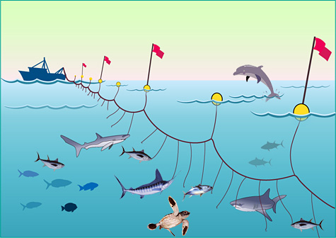 (http://www.bluepeacemaldives.org/blog/wp-content/uploads/2010/03/longline-fishing1.jpg)