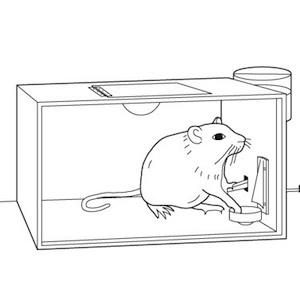 https://getrevising.co.uk/https_proxy/9081 (http://e27.co/wp-content/uploads/2013/05/Skinner_Box.jpg)