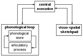 (http://upload.wikimedia.org/wikipedia/commons/thumb/e/ed/Working_memory_model.svg/269px-Working_memory_model.svg.png)