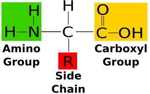 (http://education-portal.com/cimages/multimages/16/amino_acid_structure.png)