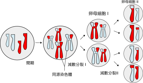 https://getrevising.co.uk/https_proxy/9566 (http://upload.wikimedia.org/wikipedia/commons/thumb/9/9a/Meiosis_Overview.svg/500px-Meiosis_Overview.svg.png)