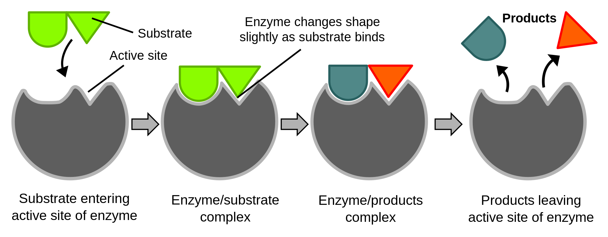 (http://upload.wikimedia.org/wikipedia/commons/thumb/2/24/Induced_fit_diagram.svg/2000px-Induced_fit_diagram.svg.png)