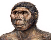 Lucy (http://www.nhm.ac.uk/resources-rx/images/1008/afarensis-headshot-109039-1.jpg)