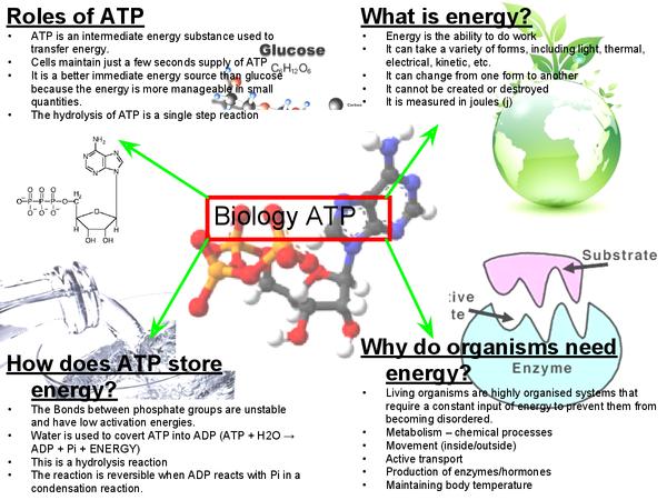 Preview of A2 Biology AQA ATP Mindmap